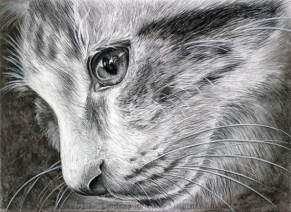 how to draw a realistic cat eye
