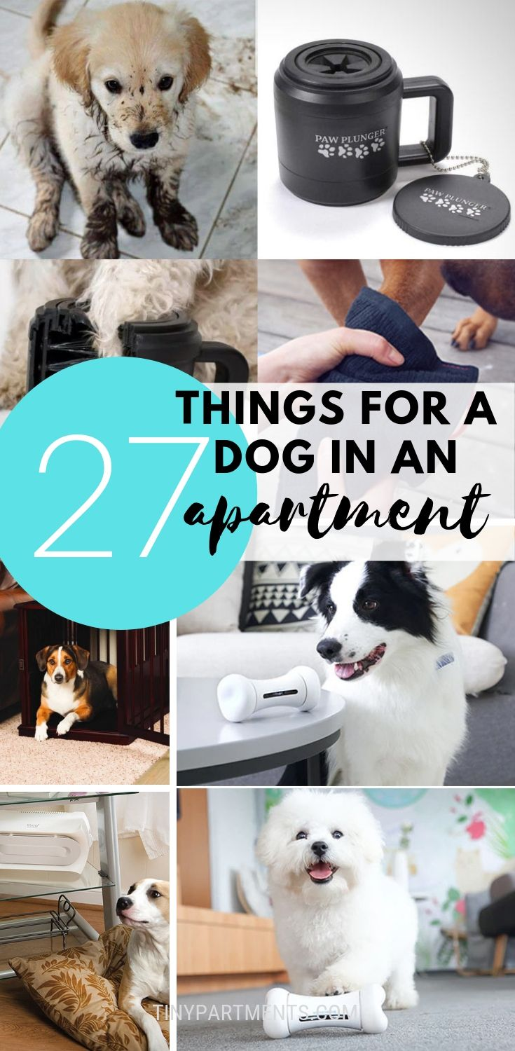 27 Things That Make Having A Dog In A Small Apartment A Walk In The Park Tiny Partments Dog Gadgets Apartment Dogs Dog Spaces