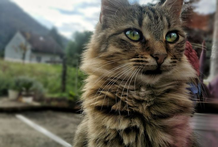 #cat #pet #posing #animal #nature #croatia