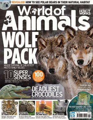 Experience amazing animals from around the globe with a new magazine dedicated to world wildlife and conservation. Meet the ultimate example of teamwork - the wolf pack. Here's where nature's peculiarly powerful contradictions take pride of place, it's where survival of the fittest meets family values. Learn how a wolf pack hunts, breeds, fights and fiercely marks its territory, as an unstoppable team.