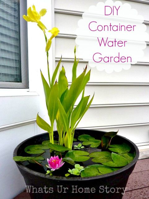 How to make this Container Water Garden for your deck, yes you read that right on your deck or patio. And no mosquitoes promise.
