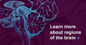 Learn more about regions of the brain. - Placebo!