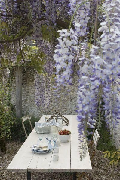 wisteria. garden eating area