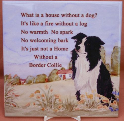 BORDER COLLIE sheepdog herding new glossy tile collectable Sandra Coen No 2 | eBay