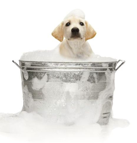 Homemade Dog Shampoo (avoid the high cost of dog shampoo at the store AND wash your furry kids with the correct pH blend!)
