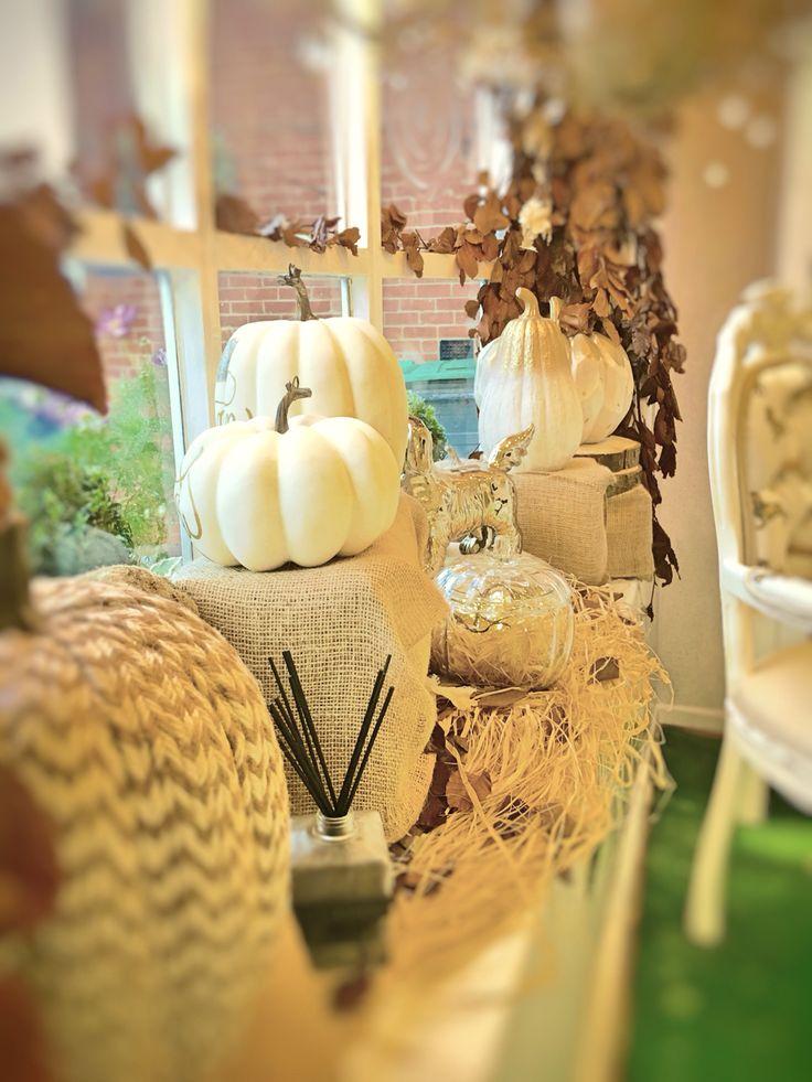 Autumn Walks Window Display