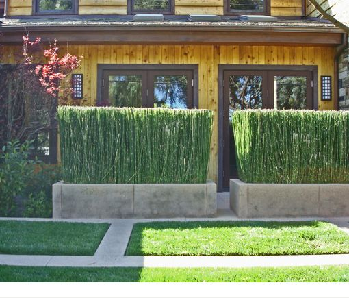 Horse hair planter screen out the world and bring green for Landscaping ideas for privacy screening