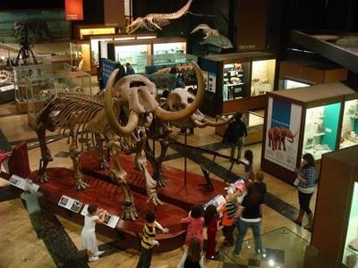 University of Michigan Museum of Natural History - Ann Arbor, Michigan