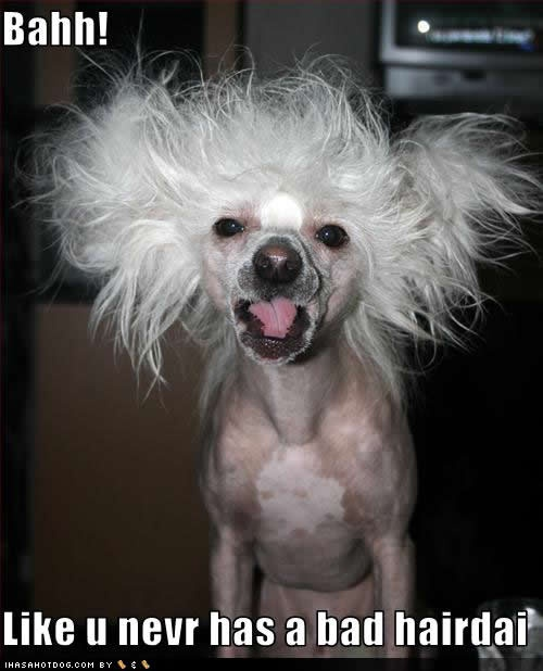 what happened here...! #dogtraining #puppycare #petsLaugh, Funny Dogs, Bad Hair, Funny Stuff, Dogs Photos, Badhair, Funny Commercials, Hair Looks, Animal