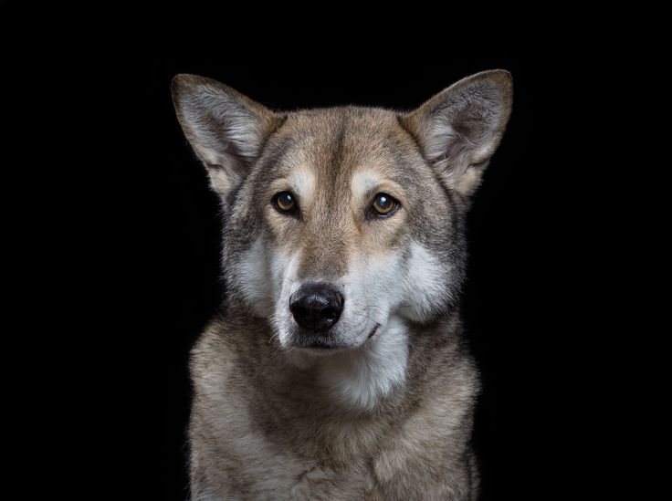 The Animal Soul project – in pictures