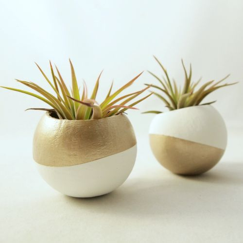 Mini Gold Plant : Images about indoor green on pinterest silk