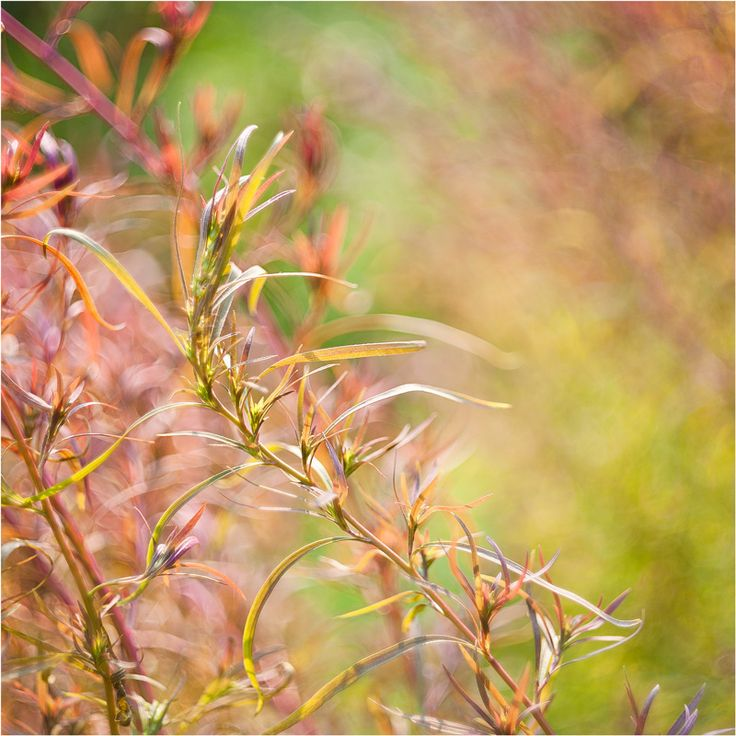 autumn colours by Elena  Khazina on 500px