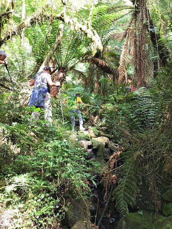 Ecoturismo: Trilha em meio a xaxins centenários, em Urubici, na Serra Catarinense - Foto: Mário Bonetti
