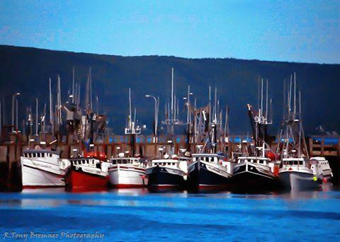 Digby scallop fleet ..  Tony Bremner