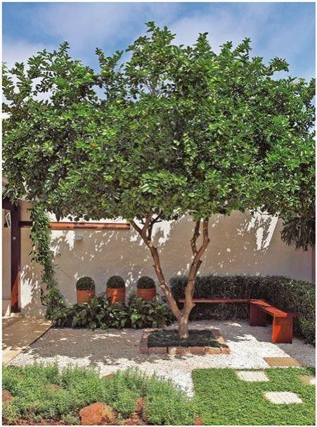 Opção de árvore: Pitangueira. Medianamente rústica, porte pequeno a médio, com 2m a 4m de altura, mas alcançando, em ótimas condições de clima e de solo, qdo adulta, alturas acima de 6m 3 e até, no máximo, 12m. Folhagem perene. Folhas pequenas e verde-escuras, quando amassadas, exalam um forte aroma característico. As flores são brancas e pequenas.Cultivada tradicionalmente em quintais domésticos.