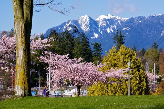 Spring in Stanley Park, Vancouver, BC