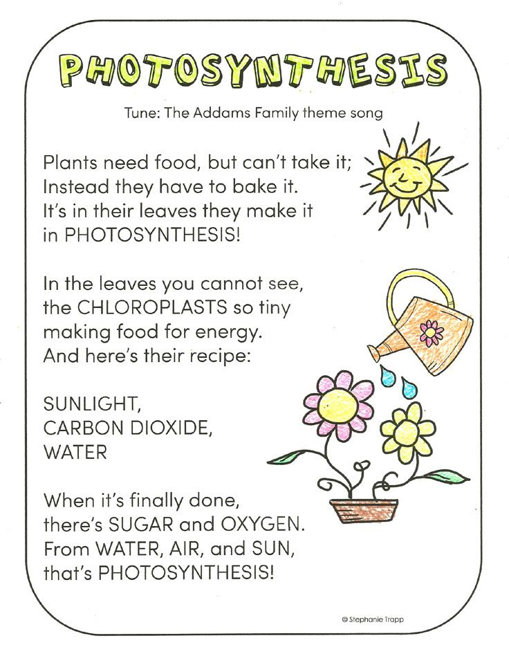 photosynthesis rap