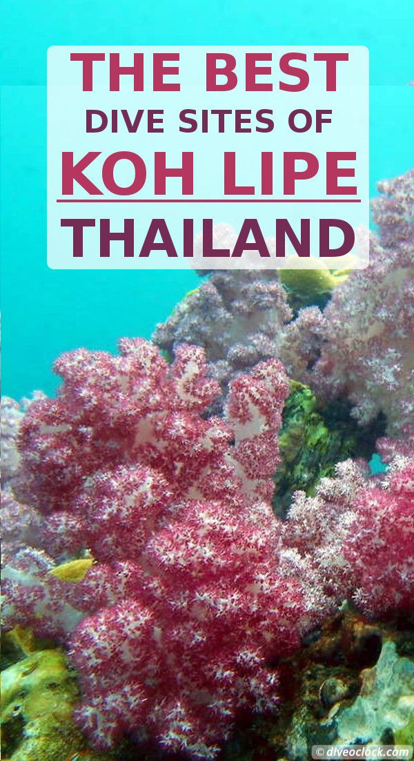 The Best Dive Sites of Koh Lipe, Thailand! Diving in the Andaman Sea is awesome! Koh Lipe is the Southernmost island of Thailand, offering over 20 different dive sites in the Tarutao National Marine Park and Butang archipelago. Rock formations with pelagic, impressive amounts of soft corals and macro, all is there for you to discover. http://www.diveoclock.com/destinations/Asia/Thailand/Koh_Lipe/ underwater | ocean | sea life | scuba diver | duiken | tauchen | dive spot | Asia