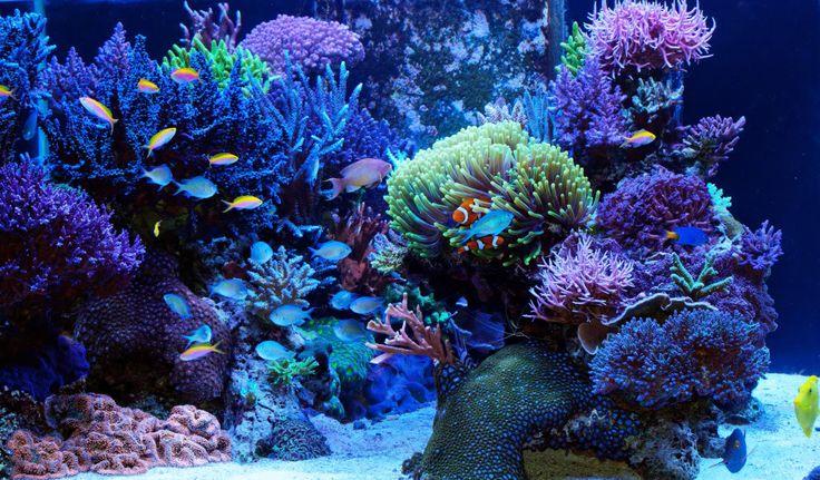 Reef Aquarium #aquarium