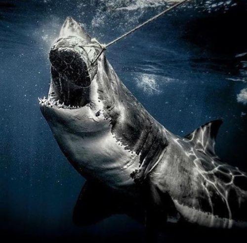 Aquarium in 2020   Great white shark, Shark photos, Shark ...