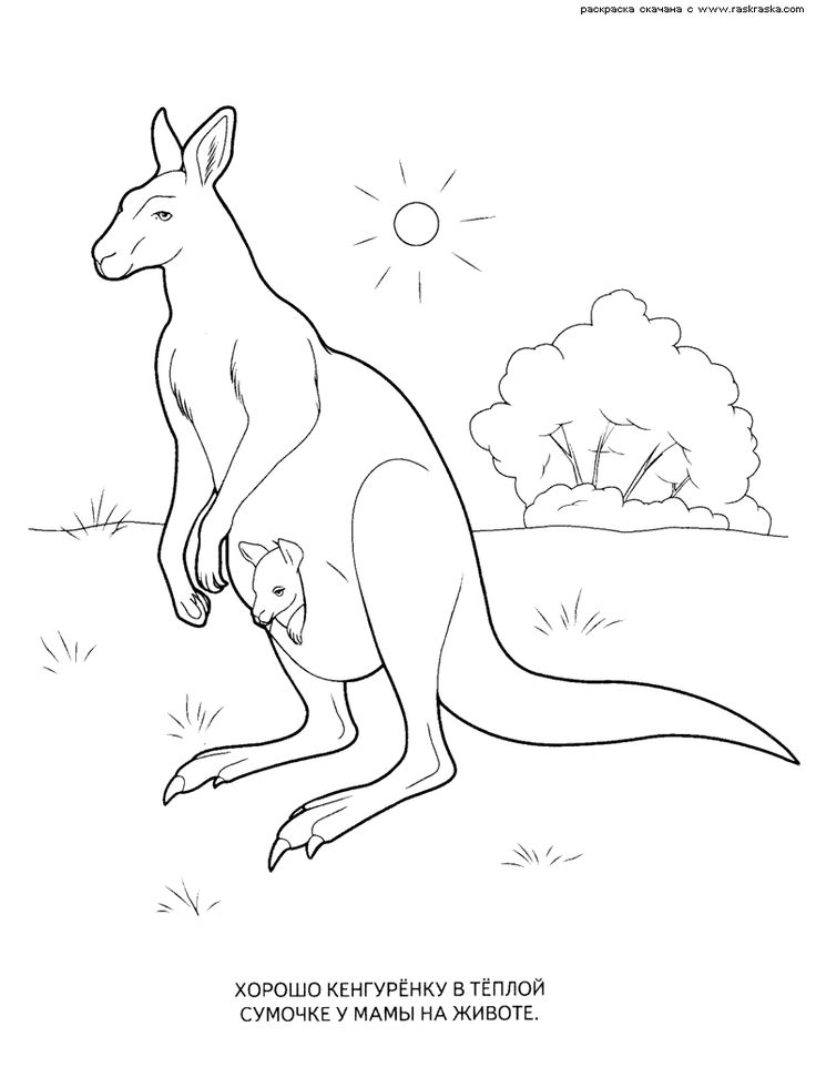 Wild Animals Coloring Pages 17 789x1032