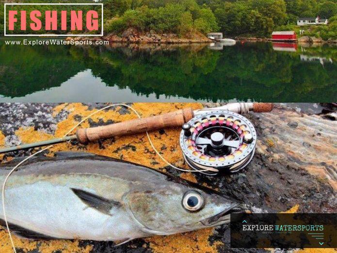Best 25 bottom fishing ideas on pinterest for Bottom fishing rods