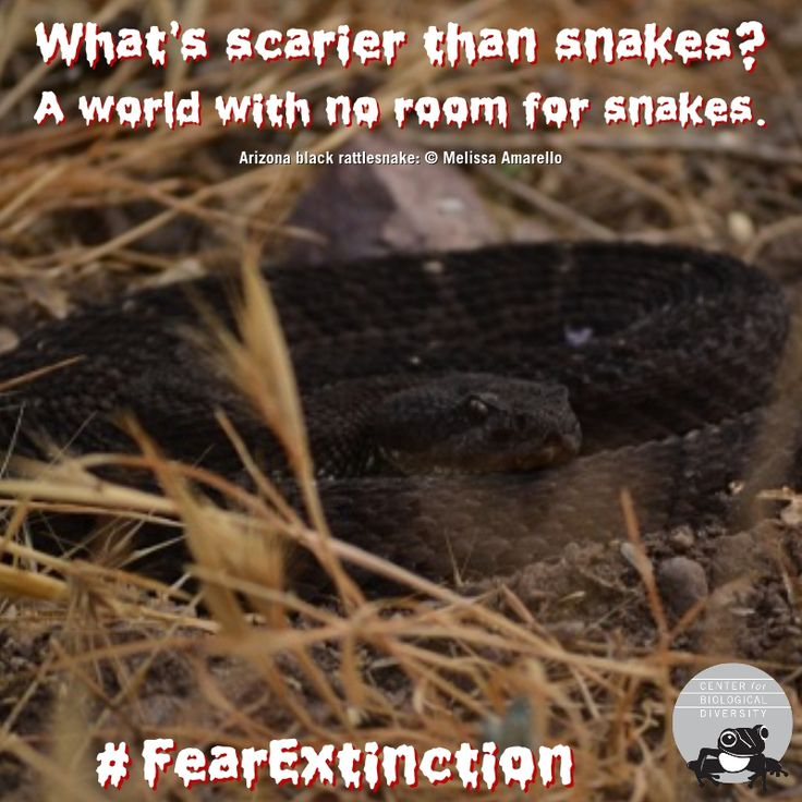 Rattlesnakes help control the spread of lyme disease, which causes scary, and serious, neurological problems.