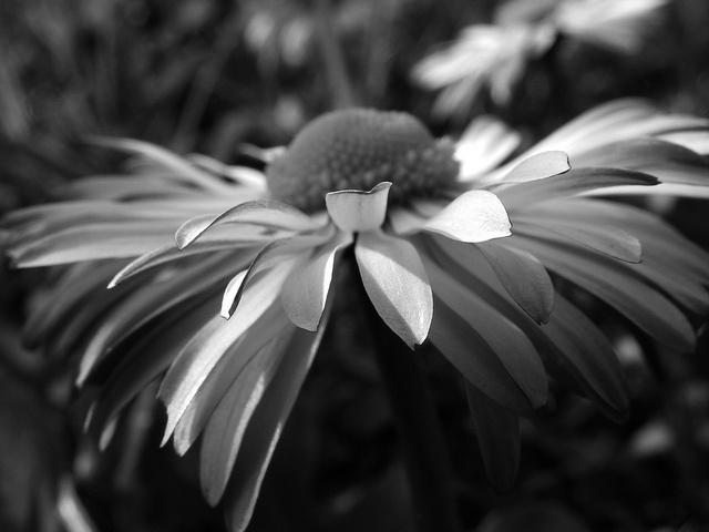 Flying Daisy, via Flickr.