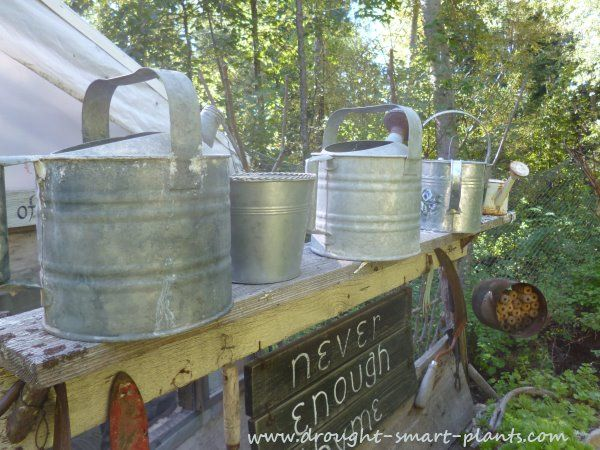 Old Galvanized Watering Cans stand ready for duty...Irrigation Tools | Gardening