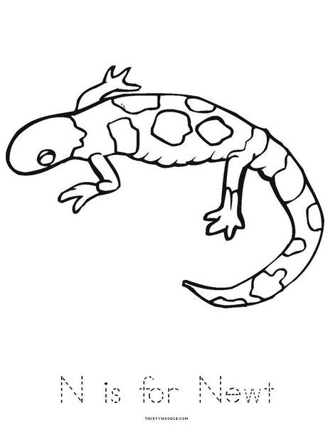 N is for Newt Worksheet - Twisty Noodle Book from ...