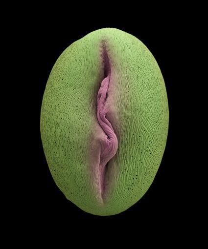 Домохозяйка вагина девушки под микроскопом