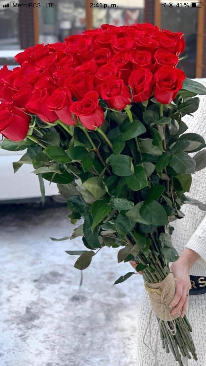 Pin By Andreana Pasanea On Rosas Vermelhas Beautiful Flowers Flowers Plants
