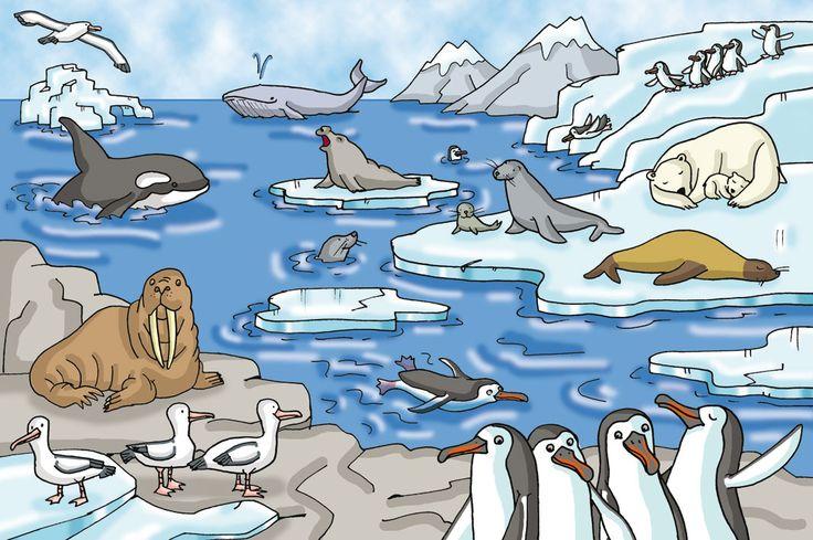 De ijsbeer leeft op de noordpool. Ze leven van vis en zee... - ThingLink