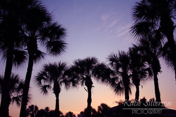 1000+ Ideas About Florida Palm Trees On Pinterest