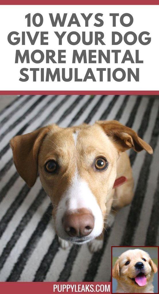 Dog Behavior Therapist Near Me and Police Dog Training