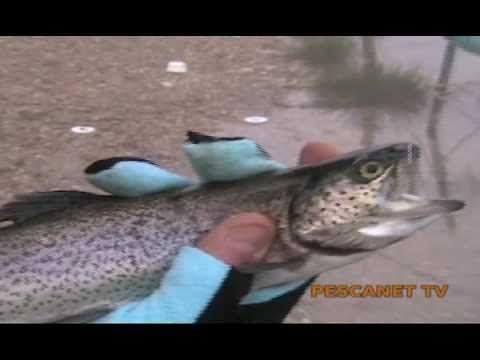 Pesca a trota lago con vetrino e bombarda - YouTube