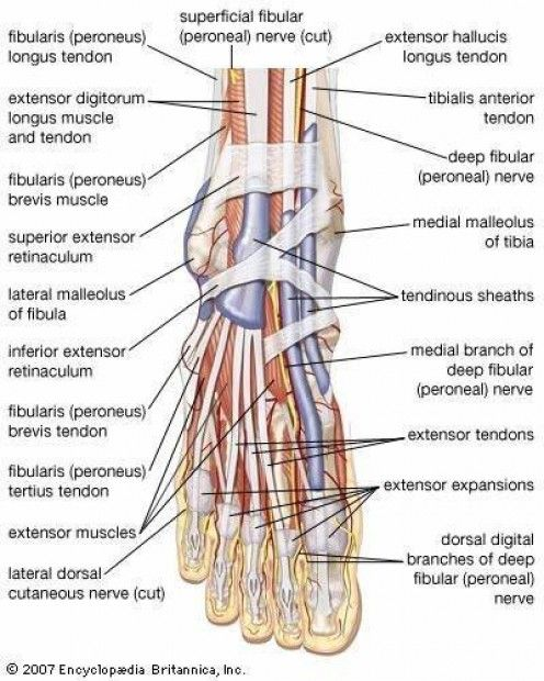 Bursitis -inflammation-symptoms - treatment 1000 Posts http://healthnaturecure.blogspot.com