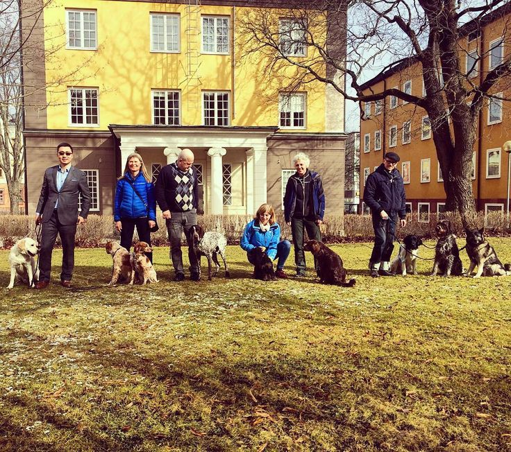Want to bring your dog to the office? Not a problem - if you happen to work in the Stora Enso office in Falun, Sweden. Here are some of our responsible and proud dog owners right outside the office building.