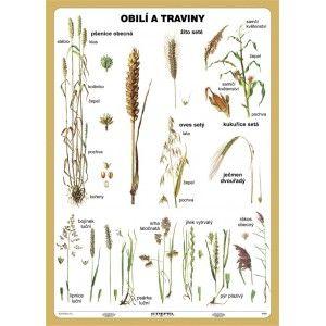 Obilí a traviny, 100 x 140