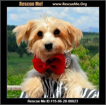 My name is Bethany and I am a beautiful Morkie (Yorkie/Maltese) who is 8 years old and I weigh 11 pounds. I need a quiet home where I will get lots of love and attention and I promise to love you. If you have the perfect home for me, please ask for me on your application. Love, Bethany 061415-23  Adoption Fee: $275.00Animal Location:  Breeder Release Adoption Service 18500 C.R. 47.7 Las Animas County Bon Carbo, CO 81024 MAP IT!