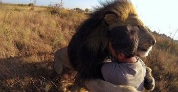 Man Tries to Hug a Wild Lion, You Won't Believe What Happens Next!