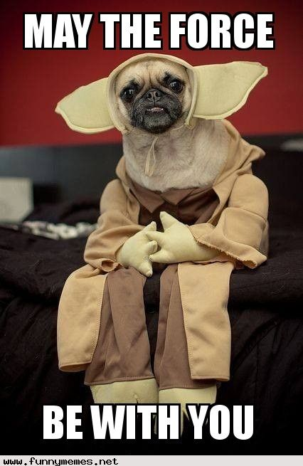 Star Wars pug | User Submitted Memes from the Website ...