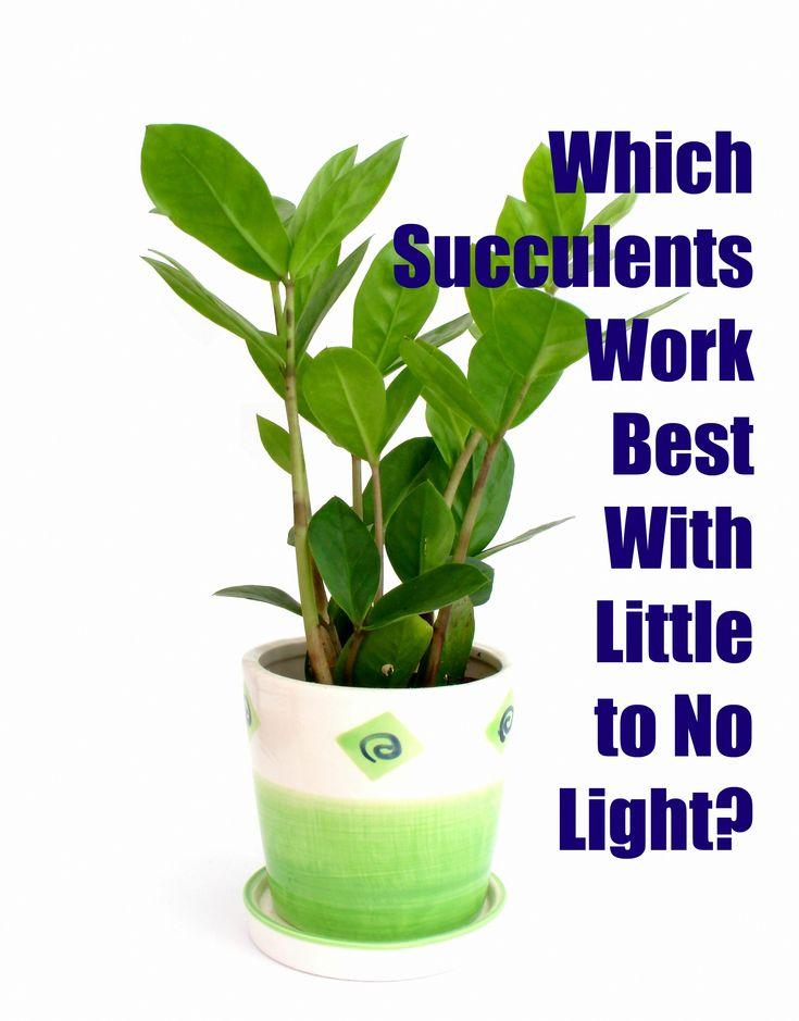 25 Best Ideas About Indoor Plants Low Light On Pinterest