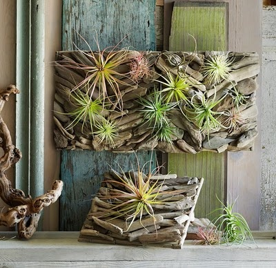 Looks like something easy to make.  They do not root.  Tillandsia's send out tendrals that grab and hold on.  The plant itself absorbs the water.
