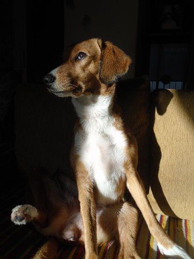 Στο The dogington post είχε στείλει ένας ιδιοκτήτης ενός σκύλου μια επιστολή όπου περιέγραφε το τι εστί σκύλος γι' αυτόν ως απάντηση σε όλους αυτούς που ...