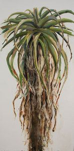 Large aloe by Nicola Firth Oil ~ 2000mm x 1000mm