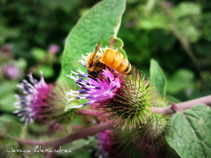 Oh look it's a #Bee, It actually took me #forever to get this #picture! Was well worth the #trials and# patience.