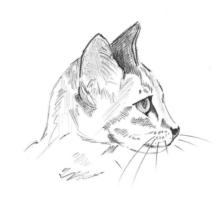 Learn how to draw a Cat! Exercise 2 of a 3 part series on sketchbuddy.com #drawing #art #tutorial #cat #kitten