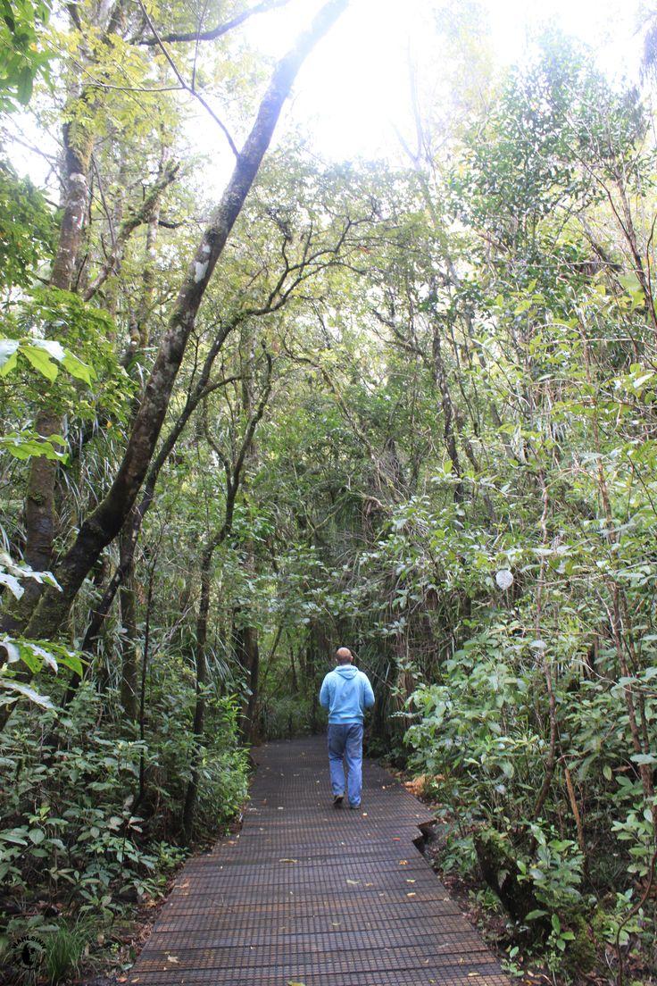 Neuseeland - Im Dschungel auf Bäume-Besichtigungs-Tour