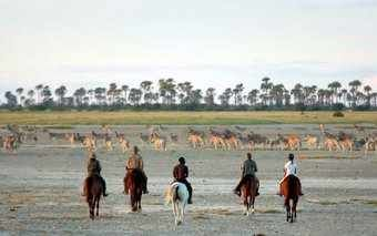 Luxury Safaris at &Beyond Nxabega Okavango Tented Camp in the Okavango, Southern Africa |